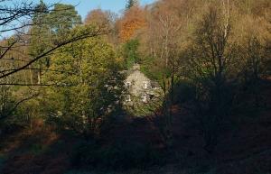Woodland Crag, Grasmere, Exterior, Woodland